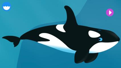 Penjelasan ikan paus
