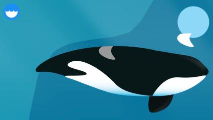 Puzzle ikan paus